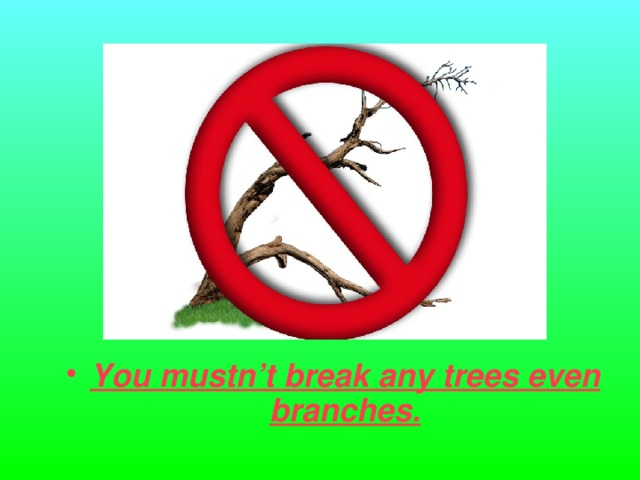You mustn't break any trees even branches.