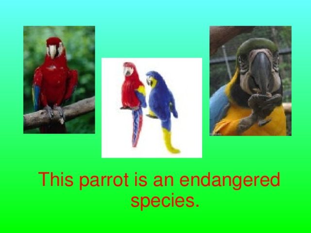 This parrot is an endangered species.