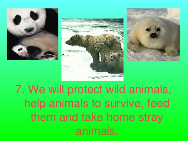 7. We will protect wild animals, help animals to survive, feed them and take home stray animals.
