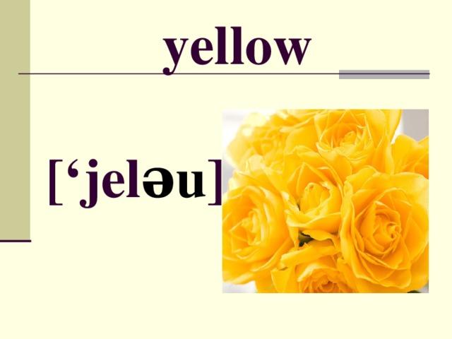 yellow [' jel əu ]