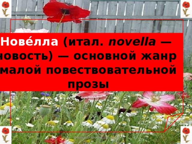 Нове́лла (итал. novella — новость)— основной жанр малой повествовательной  прозы Мизёва Алевтина Власовна