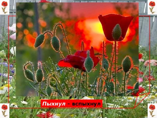 Пыхнул – вспыхнул Мизёва Алевтина Власовна
