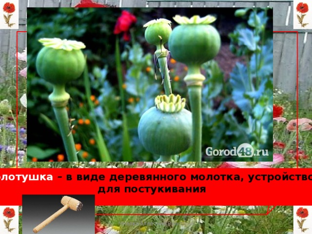 Колотушка – в виде деревянного молотка, устройство для постукивания Мизёва Алевтина Власовна