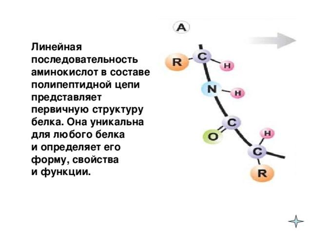 Линейная последовательность аминокислот в составе полипептидной цепи представляет первичную структуру белка. Она уникальна для любого белка  и определяет его форму, свойства  и функции.