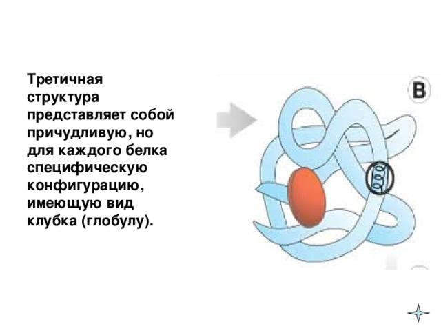 Третичная структура представляет собой причудливую, но для каждого белка специфическую конфигурацию, имеющую вид клубка (глобулу).