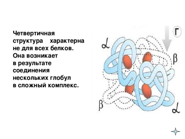 Четвертичная структура  характерна не для всех белков. Она возникает  в результате соединения нескольких глобул  в сложный комплекс.