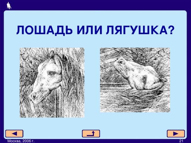 ЛОШАДЬ ИЛИ ЛЯГУШКА? Москва, 2006 г.         21