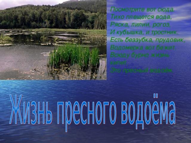Посмотрите вот сюда. Тихо плещется вода, Ряска, лилии, рогоз, И кубышка, и тростник. Есть беззубка, прудовик, Водомерка вот бежит. Всюду бурно жизнь кипит. Это пресный водоём.