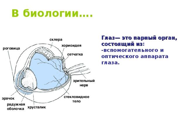 В биологии….   Глаз— это парный орган, состоящий из : -вспомогательного и оптического аппарата глаза. склера хориоидея роговица сетчатка зрительный нерв стекловидное тело зрачок радужная оболочка хрусталик