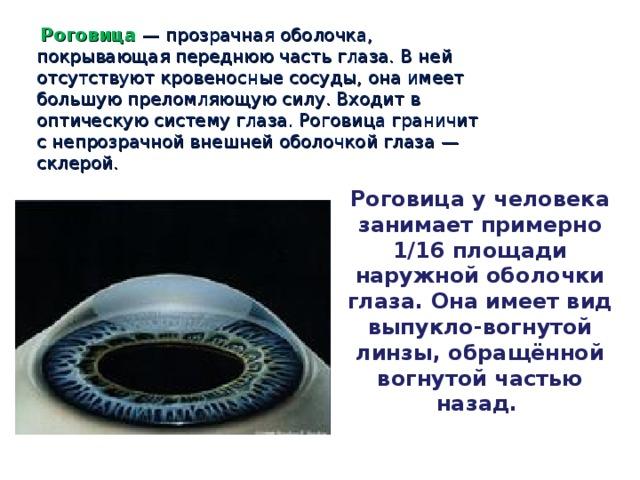 Роговица  — прозрачная оболочка, покрывающая переднюю часть глаза. В ней отсутствуют кровеносные сосуды, она имеет большую преломляющую силу. Входит в оптическую систему глаза. Роговица граничит с непрозрачной внешней оболочкой глаза — склерой. Роговица у человека занимает примерно 1/16 площади наружной оболочки глаза. Она имеет вид выпукло-вогнутой линзы, обращённой вогнутой частью назад.