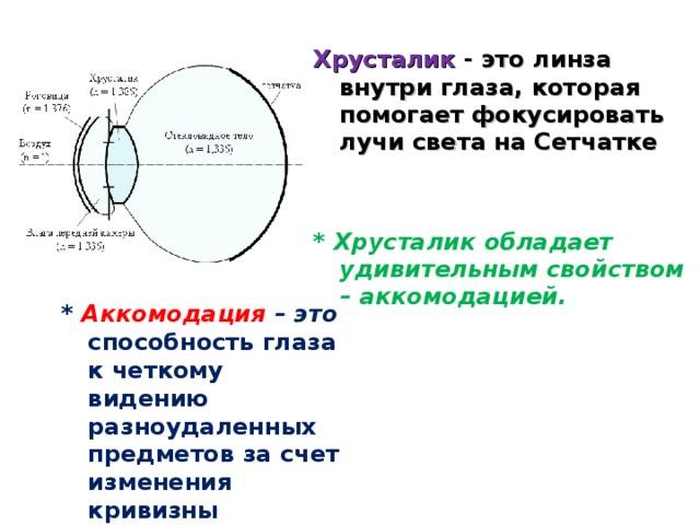 Хрусталик - это линза внутри глаза, которая помогает фокусировать лучи света на Сетчатке   * Хрусталик обладает удивительным свойством – аккомодацией.   * Аккомодация – это  способность глаза к четкому видению разноудаленных предметов за счет изменения кривизны хрусталика.