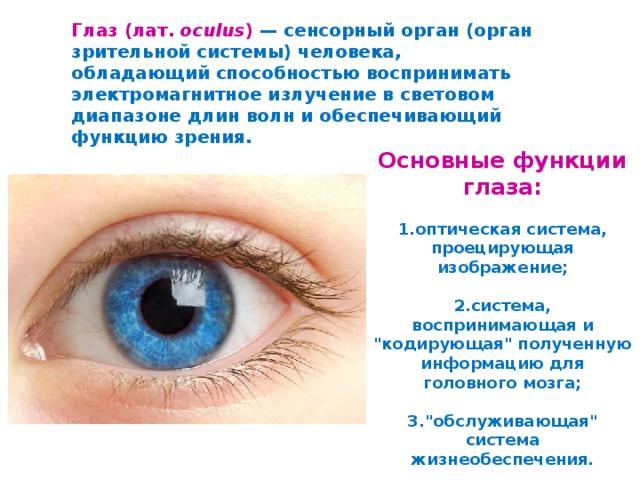 Глаз (лат. oculus ) — сенсорный орган (орган зрительной системы) человека, обладающий способностью воспринимать электромагнитное излучение в световом диапазоне длин волн и обеспечивающий функцию зрения.   Основные функции глаза:   1.оптическая система, проецирующая изображение;   2.система, воспринимающая и