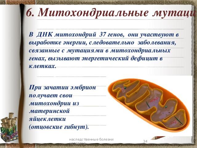 6. Митохондриальные мутации В ДНК митохондрий 37 генов, они участвуют в выработке энергии, следовательно заболевания, связанные с мутациями в митохондриальных генах, вызывают энергетический дефицит в клетках. При зачатии эмбрион получает свои митохондрии из материнской яйцеклетки (отцовские гибнут). 7 наследственные болезни человека 7