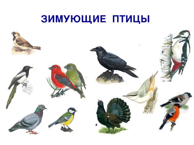 ЗИМУЮЩИЕ ПТИЦЫ http://images.google.ru/imglanding?imgurl=http://www.goldensites.ru/media/1/B_72.jpg&imgrefurl=http://www.goldensites.ru/item/176&usg=__gI4_XHfTiwlh6CR_bgCarXzeolQ%3D&h=455&w=480&sz=77&hl=ru&tbnid=3bM3Rmun9yt3eM:&tbnh=122&tbnw=129&prev=/images%3Fq%3D%25D0%25B4%25D1%258F%25D1%2582%25D0%25B5%25D0%25BB%26gbv%3D2%26ndsp%3D20%26hl%3Dru%26sa%3DN%26start%3D20%26newwindow%3D1&q=%D0%B4%D1%8F%D1%82%D0%B5%D0%BB&gbv=2&ndsp=20&sa=N&start=22&newwindow=1 http://images.google.ru/imglanding?imgurl=http://ptici.net/foto_max/sinica.jpg&imgrefurl=http://ptici.net/ptici/sinica.htm&usg=__XK7f4cbVTEw2WbjCX2qiVJaBqak%3D&h=287&w=341&sz=18&hl=ru&tbnid=p7dFED4qg4peBM:&tbnh=101&tbnw=120&prev=/images%3Fq%3D%25D1%2581%25D0%25B8%25D0%25BD%25D0%25B8%25D1%2586%25D0%25B0%26gbv%3D2%26ndsp%3D20%26hl%3Dru%26sa%3DG%26newwindow%3D1&q=%D1%81%D0%B8%D0%BD%D0%B8%D1%86%D0%B0&gbv=2&ndsp=20&sa=G&newwindow=1&start=0 http://images.google.ru/imglanding?imgurl=http://nature.ok.ru/picture/birds/2-107.jpg&imgrefurl=http://nature.ok.ru/doc/birds/2_107.htm&usg=__s7L-rTx0tzSQhMnTS3_CDo_i51g%3D&h=320&w=320&sz=11&hl=ru&tbnid=MLemfBsiEvKeGM:&tbnh=118&tbnw=118&prev=/images%3Fq%3D%25D0%25B2%25D0%25BE%25D1%2580%25D0%25BE%25D0%25B1%25D0%25B5%25D0%25B9%26gbv%3D2%26ndsp%3D20%26hl%3Dru%26sa%3DG%26newwindow%3D1&q=%D0%B2%D0%BE%D1%80%D0%BE%D0%B1%D0%B5%D0%B9&gbv=2&ndsp=20&sa=G&newwindow=1&start=4 http://images.google.ru/images?gbv=2&ndsp=20&hl=ru&newwindow=1&sa=3&q=%D0%BF%D0%BE%D0%BF%D0%BB%D0%B7%D0%B5%D0%BD%D1%8C&btnG=%D0%9F%D0%BE%D0%B8%D1%81%D0%BA+%D0%BA%D0%B0%D1%80%D1%82%D0%B8%D0%BD%D0%BE%D0%BA http://helena54.narod.ru/park10.html http://vingrad.ru/users/yudin/portfolio/