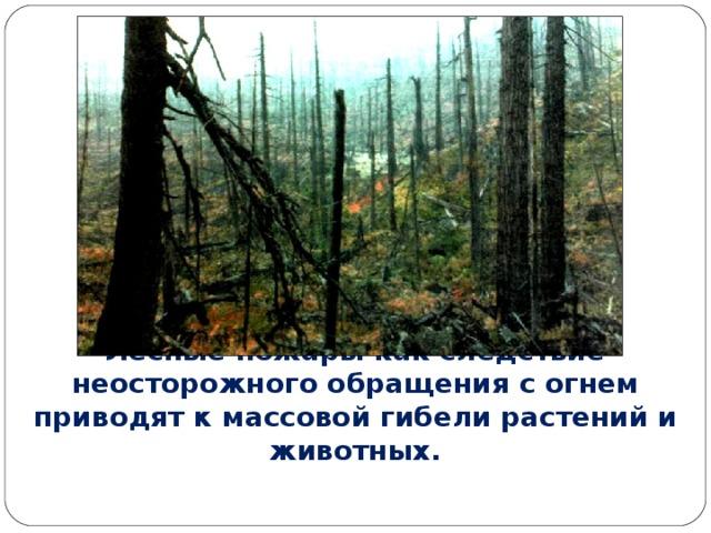 Лесные пожары как следствие неосторожного обращения с огнем приводят к массовой гибели растений и животных.
