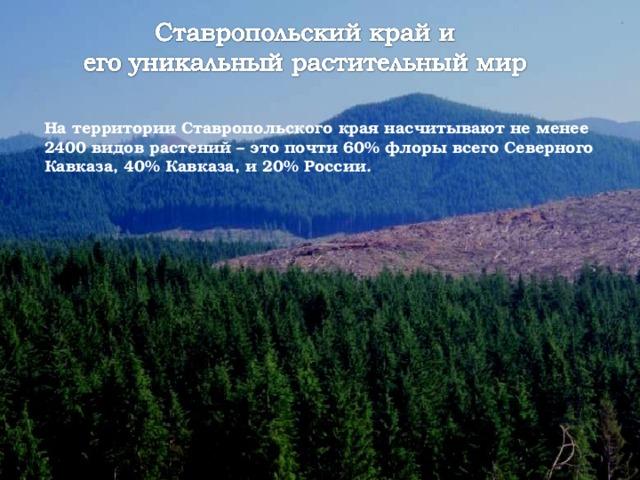 На территории Ставропольского края насчитывают не менее 2400 видов растений – это почти 60% флоры всего Северного Кавказа, 40% Кавказа, и 20% России.