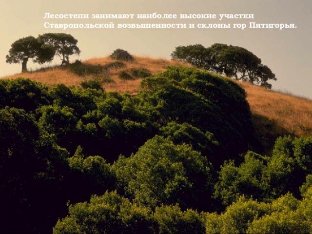 Лесостепи занимают наиболее высокие участки Ставропольской возвышенности и склоны гор Пятигорья.