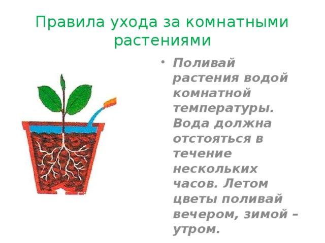 Правила ухода за комнатными растениями