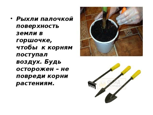 Рыхли палочкой поверхность земли в горшочке, чтобы к корням поступал воздух. Будь осторожен – не повреди корни растениям.