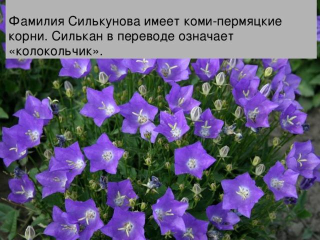Фамилия Силькунова имеет коми-пермяцкие корни. Силькан в переводе означает «колокольчик».