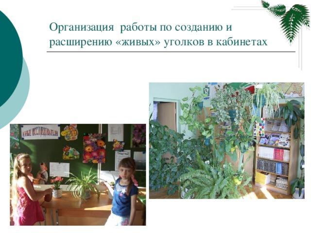 Организация работы по созданию и расширению «живых» уголков в кабинетах