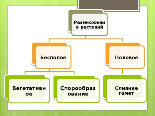 Размножение растений Бесполое Половое Слияние гамет Вегетативное Спорообразование 5