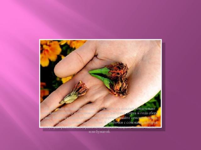 Не забудьте подписать пакеты с семенами и в каждый обязательно положите этикетку с указанием названия растения, сорта и года сбора семян. Во время сушки периодически перемешивайте семенной ворох, следите, чтобы не появилась плесень. Коробочки с семенами, которые могут растрескиваться и разлетаться, нужно накрыть тонкой тканью или бумагой.