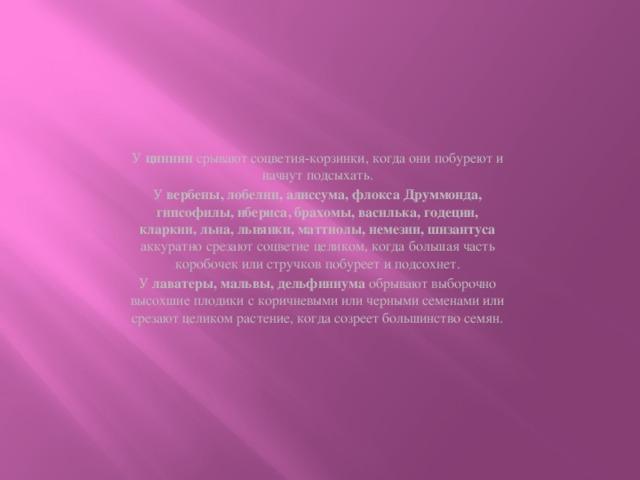 У циннии срывают соцветия-корзинки, когда они побуреют и начнут подсыхать. У вербены, лобелии, алиссума, флокса Друммонда, гипсофилы, ибериса, брахомы, василька, годеции, кларкии, льна, льнянки, маттиолы, немезии, шизантуса аккуратно срезают соцветие целиком, когда большая часть коробочек или стручков побуреет и подсохнет. У лаватеры, мальвы, дельфиниума обрывают выборочно высохшие плодики с коричневыми или черными семенами или срезают целиком растение, когда созреет большинство семян.