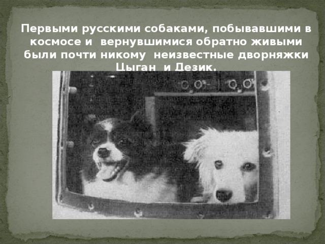 Первыми русскими собаками, побывавшими в космосе и вернувшимися обратно живыми были почти никому неизвестные дворняжки Цыган и Дезик.