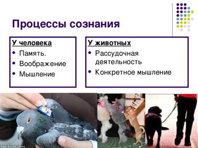 Процессы сознания У человека У животных