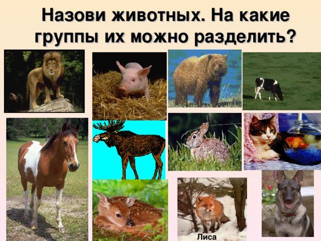 Назови животных. На какие группы их можно разделить? Лиса