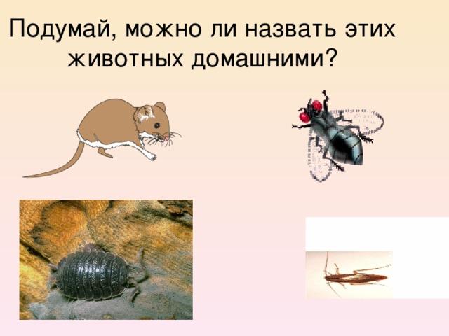 Подумай, можно ли назвать этих животных домашними?