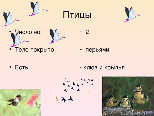 Птицы Число ног  Тело покрыто  Есть 2  перьями  - клюв и крылья