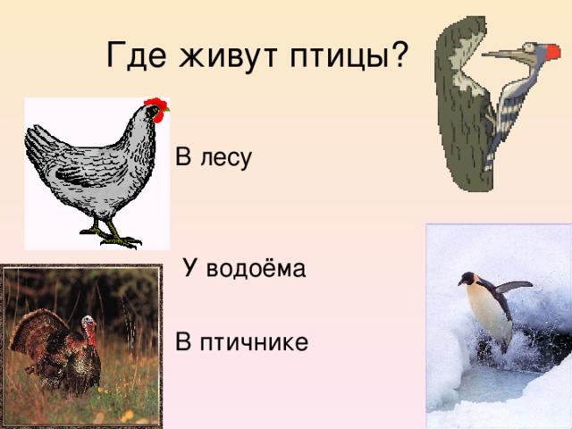 Где живут птицы?  В лесу  У водоёма  В птичнике