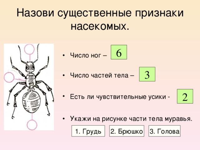 Назови существенные признаки насекомых. Число ног –  Число частей тела –  Есть ли чувствительные усики -  Укажи на рисунке части тела муравья.  6 3 2 1. Грудь 2. Брюшко 3. Голова