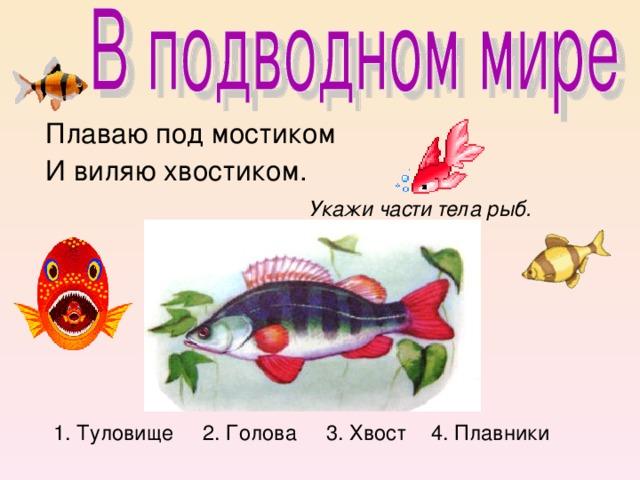 Плаваю под мостиком  И виляю хвостиком.  Укажи части тела рыб.         1. Туловище 2. Голова 3. Хвост 4. Плавники