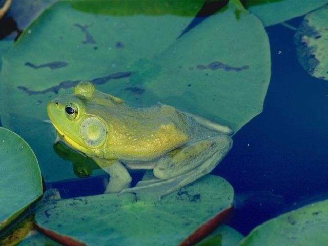 У воды живёт плутовка И скрывается так ловко, Что беднягам мухам, мошкам Не уйти от этой крошки.