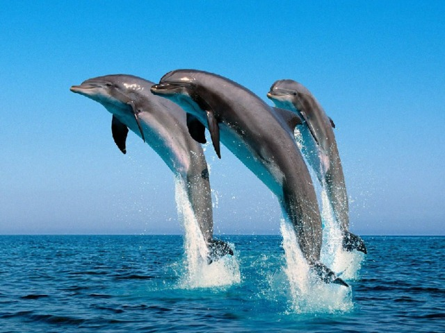 C:\Documents and Settings\Admin\Рабочий стол\дельфины.j