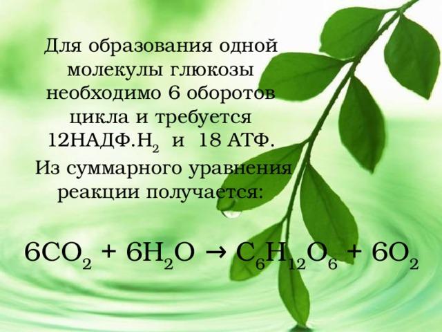 Для образования одной молекулы глюкозы необходимо 6 оборотов цикла и требуется 12НАДФ.Н 2  и 18 АТФ.  Из суммарного уравнения реакции получается: 6СО 2 + 6Н 2 О → С 6 Н 12 О 6 + 6О 2