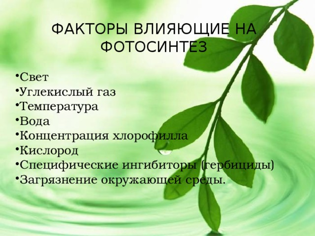 фотосинтез от внутреннего и внешних факторов все элементарно
