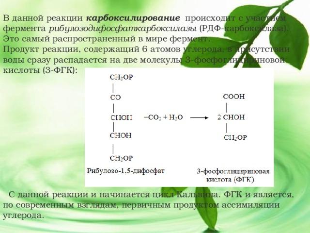В данной реакции карбоксилирование происходит с участием фермента рибулозодифосфаткарбоксилазы (РДФ-карбоксилаза). Это самый распространенный в мире фермент. Продукт реакции, содержащий 6 атомов углерода, в присутствии воды сразу распадается на две молекулы 3-фосфоглицириновой кислоты (3-ФГК):  С данной реакции и начинается цикл Кальвина. ФГК и является, по современным взглядам, первичным продуктом ассимиляции углерода.