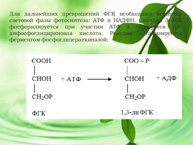 Для дальнейших превращений ФГК необходимы вещества световой фазы фотосинтеза: АТФ и НАДФН. Сначала 3-ФГК фосфорилируется при участии АТФ и образуется 1,3-дифосфоглицириновая кислота. Реакция катализируется ферментом фосфоглицераткиназой: