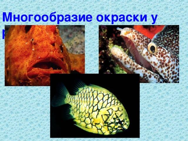 Многообразие окраски у рыб