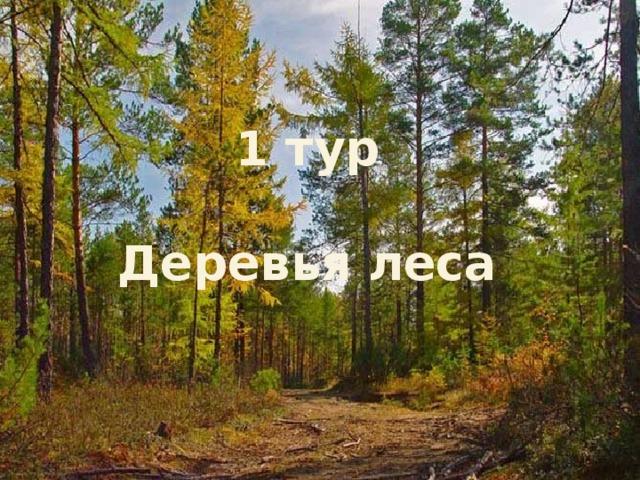 1 тур  Деревья леса