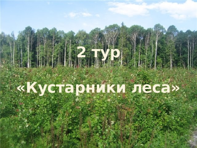 2 тур  «Кустарники леса»