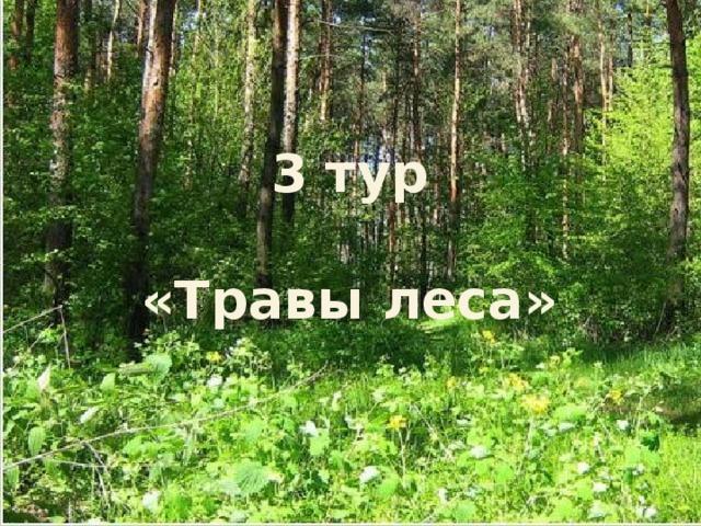 3 тур  «Травы леса»