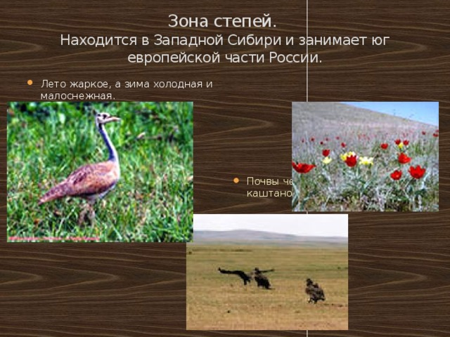 Зона степей.  Находится в Западной Сибири и занимает юг европейской части России.