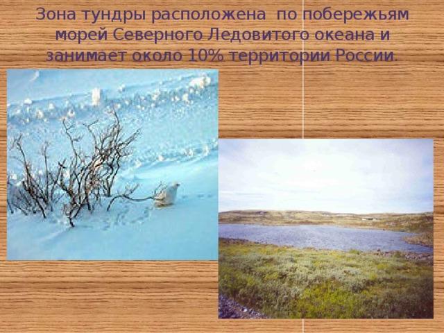 Зона тундры расположена по побережьям морей Северного Ледовитого океана и занимает около 10% территории России.