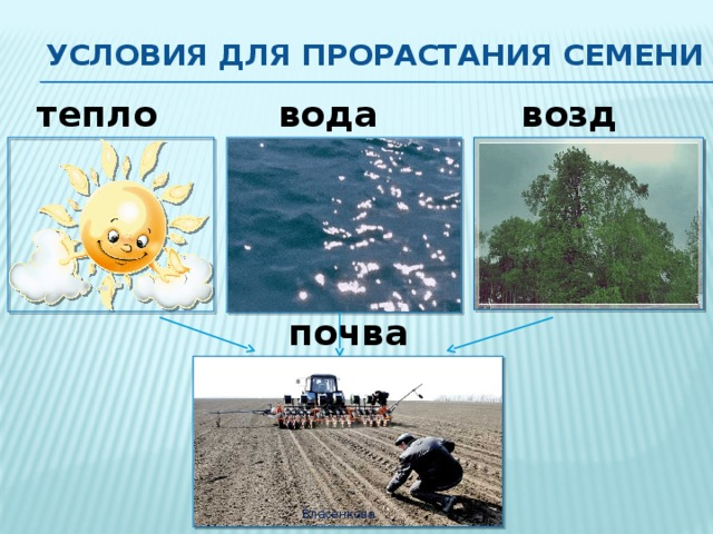 Условия для прорастания семени тепло вода воздух почва Власенкова