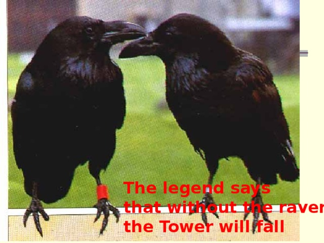 The legend says that without the ravens  the Tower will fall